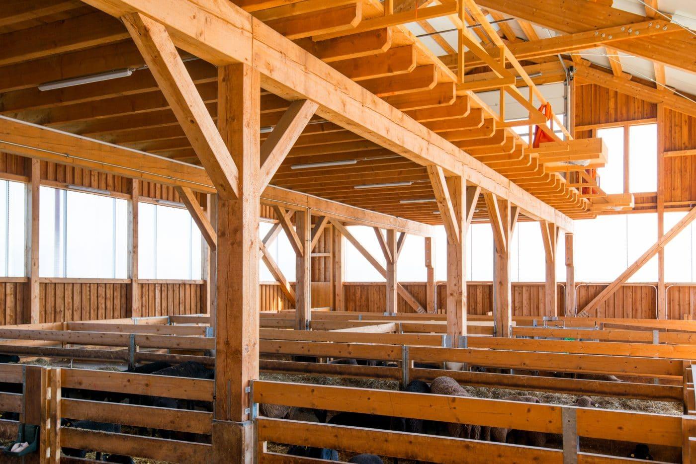 Neubau Schafstall Hutter Mortantsch